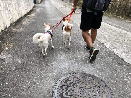 ローレルと散歩