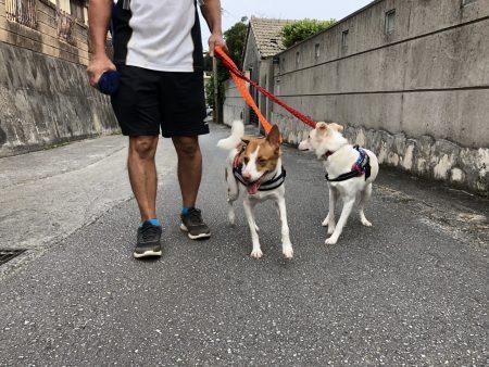 ローレルと散歩2