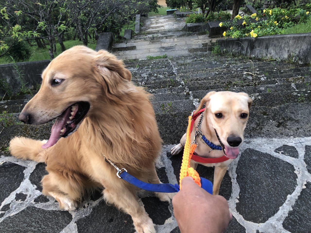 プジーとお散歩
