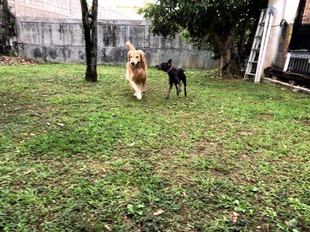 ボール追いかける1