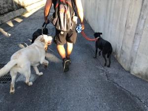 ルナちゃんと散歩に4
